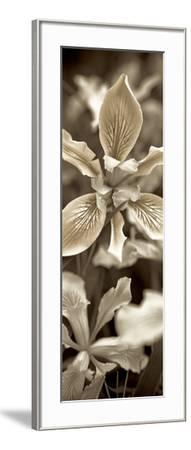 Florison 68-Alan Blaustein-Framed Photographic Print