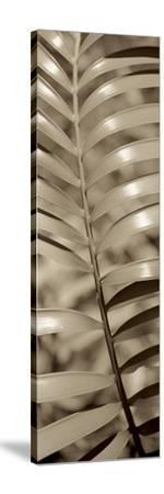Florison 92-Alan Blaustein-Stretched Canvas Print