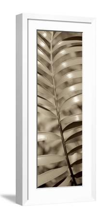 Florison 92-Alan Blaustein-Framed Photographic Print