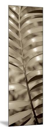 Florison 92-Alan Blaustein-Mounted Photographic Print