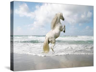 Dream Horses 096-Bob Langrish-Stretched Canvas Print