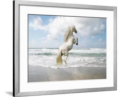 Dream Horses 096-Bob Langrish-Framed Photographic Print