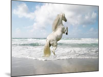 Dream Horses 096-Bob Langrish-Mounted Photographic Print