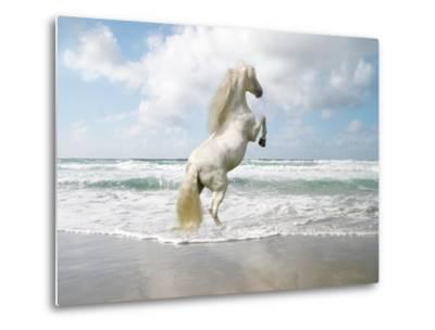 Dream Horses 096-Bob Langrish-Metal Print