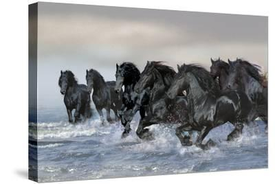 Dream Horses 019-Bob Langrish-Stretched Canvas Print