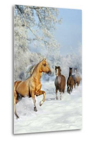 Dream Horses 017-Bob Langrish-Metal Print
