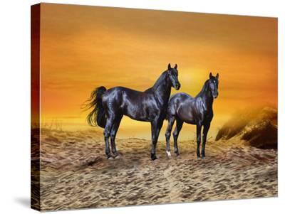 Dream Horses 016-Bob Langrish-Stretched Canvas Print
