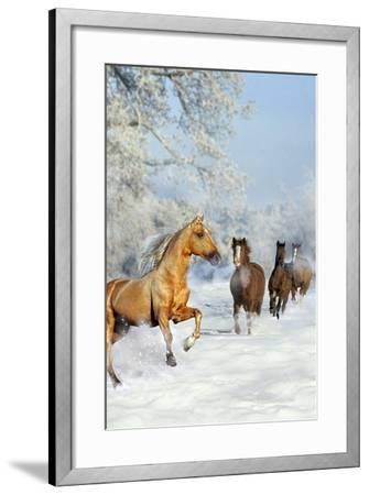 Dream Horses 017-Bob Langrish-Framed Photographic Print