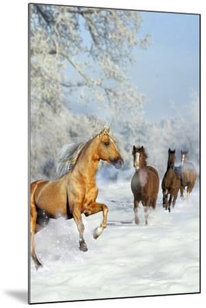 Dream Horses 017-Bob Langrish-Mounted Photographic Print