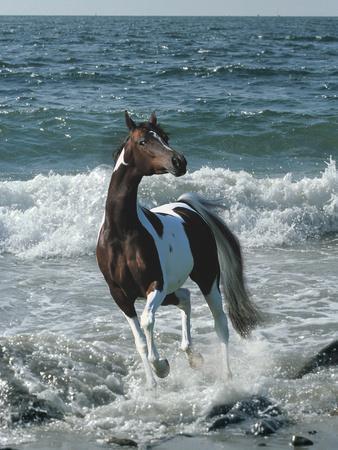Dream Horses 010-Bob Langrish-Framed Photographic Print