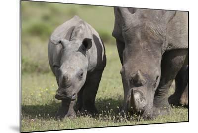 South African White Rhinoceros 014-Bob Langrish-Mounted Photographic Print