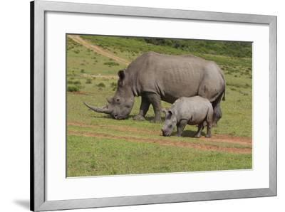 South African White Rhinoceros 028-Bob Langrish-Framed Photographic Print
