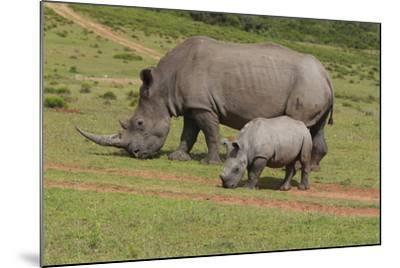 South African White Rhinoceros 028-Bob Langrish-Mounted Photographic Print
