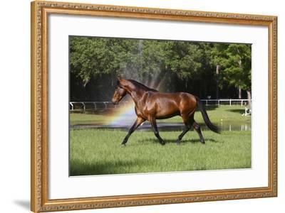 Cheveyo-Bob Langrish-Framed Photographic Print
