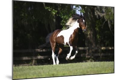 Tennessee Walker 001-Bob Langrish-Mounted Photographic Print