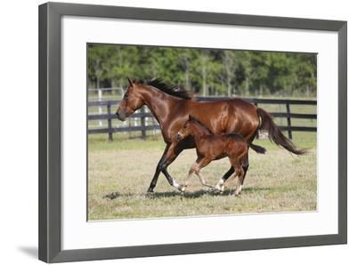 Quarter 025-Bob Langrish-Framed Photographic Print