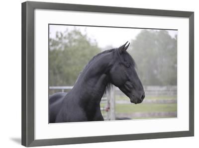 Triunfador X 002-Bob Langrish-Framed Photographic Print