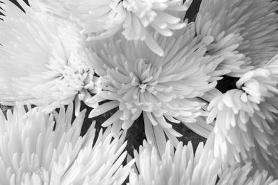 Blooming White BW-Bob Rouse-Framed Photographic Print