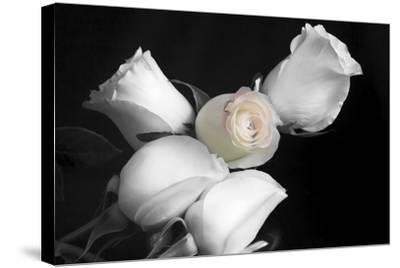 005 Roses BW-Bob Rouse-Stretched Canvas Print