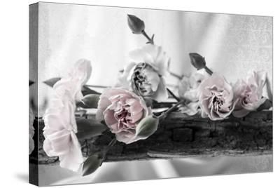 Passion Pink 2 BW-Bob Rouse-Stretched Canvas Print