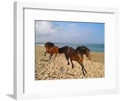 Dream Horses 002-Bob Langrish-Framed Premium Photographic Print