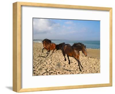 Dream Horses 002-Bob Langrish-Framed Premium Photographic Print