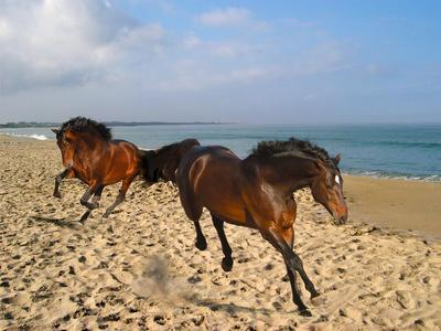 Dream Horses 002-Bob Langrish-Photographic Print