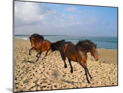Dream Horses 002-Bob Langrish-Mounted Photographic Print