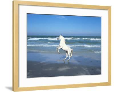 Dream Horses 006-Bob Langrish-Framed Photographic Print