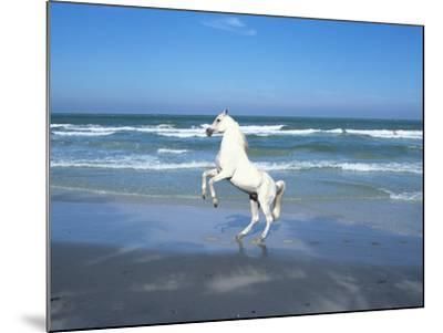 Dream Horses 006-Bob Langrish-Mounted Photographic Print