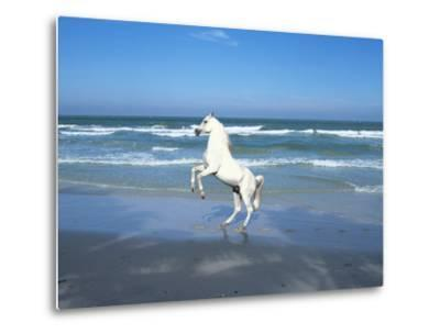 Dream Horses 006-Bob Langrish-Metal Print