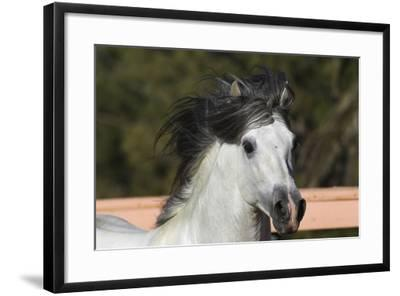 Andalusian 009-Bob Langrish-Framed Photographic Print