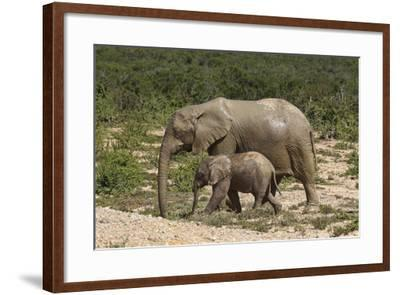 African Elephants 055-Bob Langrish-Framed Photographic Print