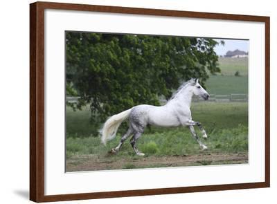 Andalusian 001-Bob Langrish-Framed Photographic Print