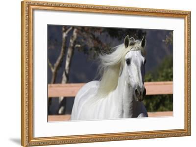Andalusian 003-Bob Langrish-Framed Photographic Print