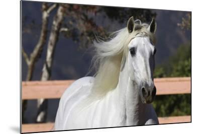 Andalusian 003-Bob Langrish-Mounted Photographic Print