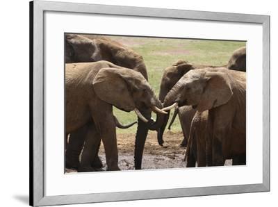 African Elephants 049-Bob Langrish-Framed Photographic Print