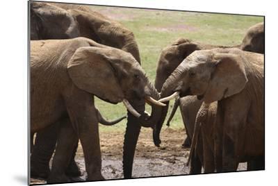 African Elephants 049-Bob Langrish-Mounted Photographic Print