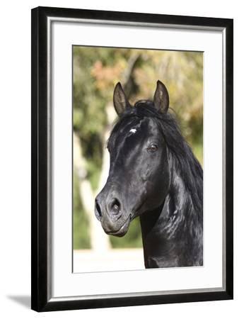 Andalusian 012-Bob Langrish-Framed Photographic Print