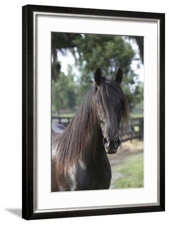 Andalusian 010-Bob Langrish-Framed Photographic Print