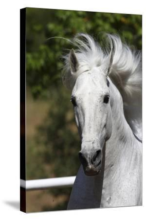 Andalusian 030-Bob Langrish-Stretched Canvas Print
