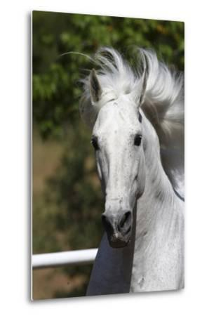Andalusian 030-Bob Langrish-Metal Print