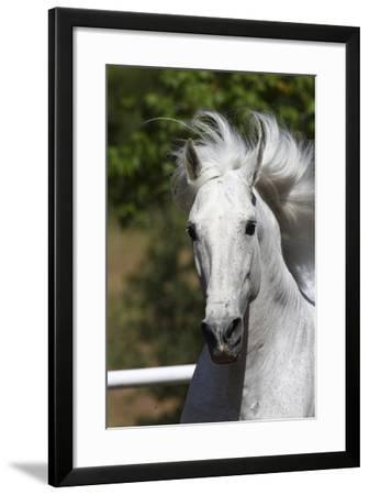 Andalusian 030-Bob Langrish-Framed Photographic Print