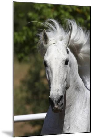 Andalusian 030-Bob Langrish-Mounted Photographic Print