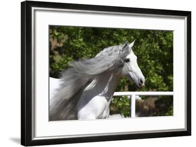 Andalusian 032-Bob Langrish-Framed Photographic Print