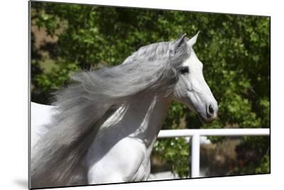 Andalusian 032-Bob Langrish-Mounted Photographic Print