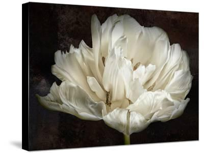 Double White Tulip-Cora Niele-Stretched Canvas Print
