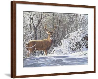 Winter Whitetail-Bruce Miller-Framed Giclee Print