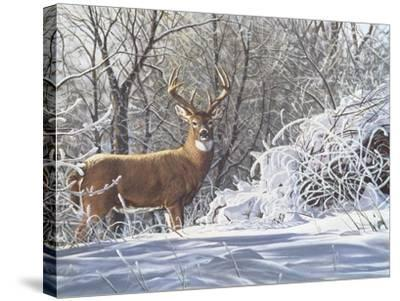 Winter Whitetail-Bruce Miller-Stretched Canvas Print