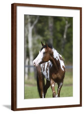 Painted 012-Bob Langrish-Framed Photographic Print